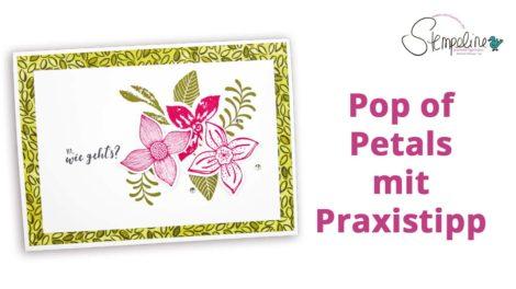 Pop of Petals Video